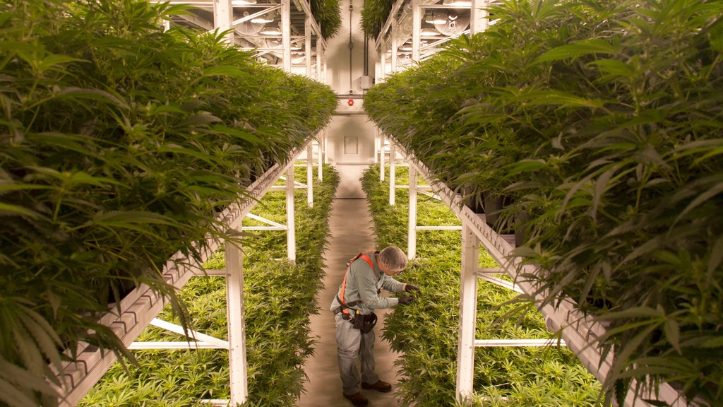 A file photo shows a cannabis production facility. Organigram says it has slashed its workforce by about 25 per cent.