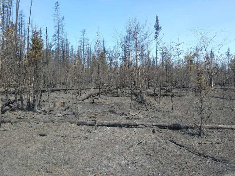 Dry conditions have contributed to a busy year for wildfires in the province. Pictured is damage caused by a wildfire along in the Sabbies River area near Miramichi.