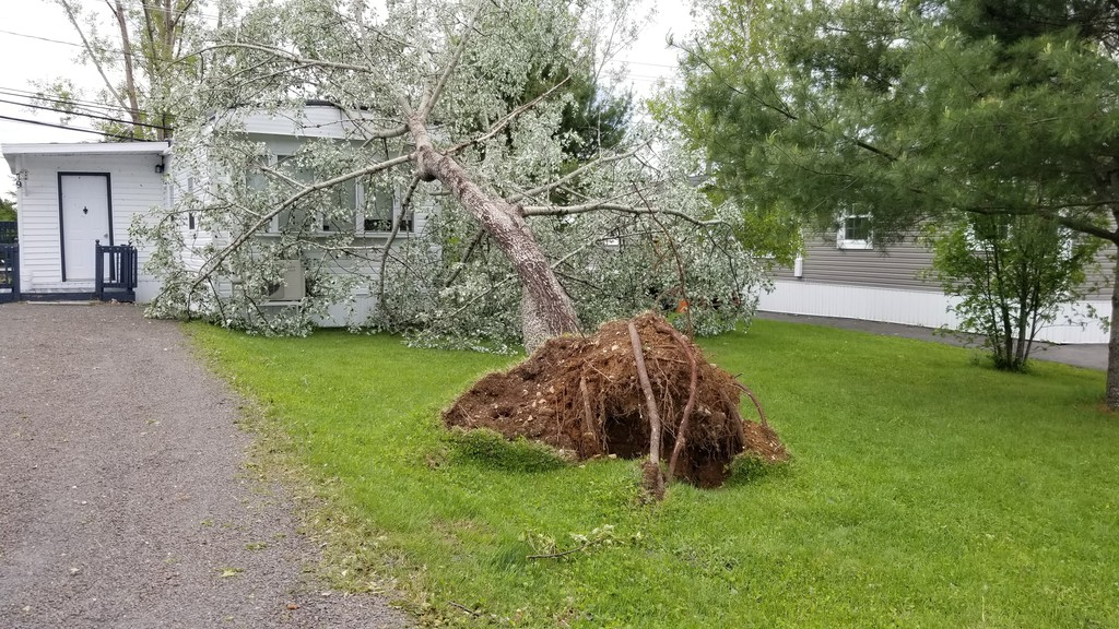 Environment Canada has issued an alert, warning residents in central New Brunswick that severe thunderstorms may move through the region on Thursday afternoon. Above, a tree fell onto a mini-home at the Hanwell mini-home community as a result of the thunderstorm in June.