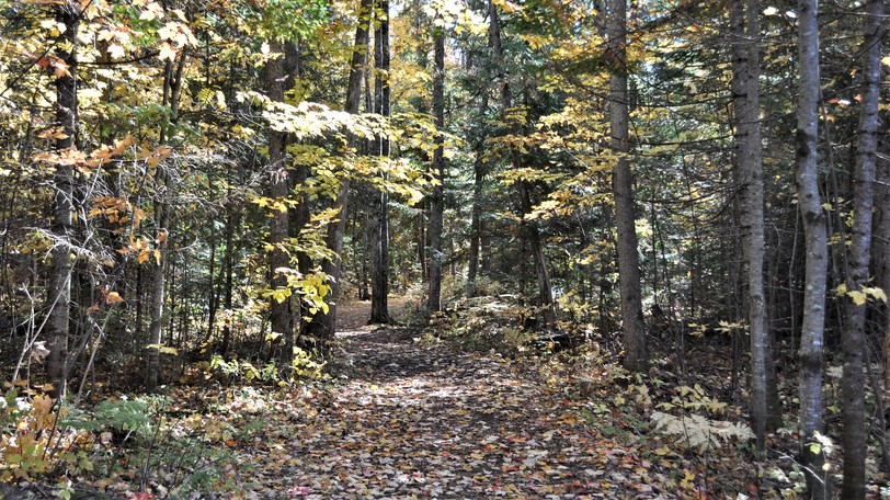 The Village of Plaster Rock is seeking funds to make its Sadler Nature Trail more accessible by replacing the wood chip base with gravel topped with crusher waste. The park project will also see small bridges replaced and benches refurbished along the 1 km walking trail.