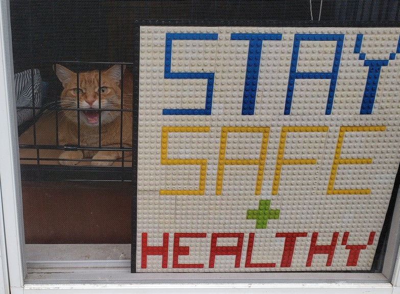 Felix the cat appears feisty in his front window after spending eight days outdoors. He suffered a broken pelvis and must remain caged for six weeks while he recovers.