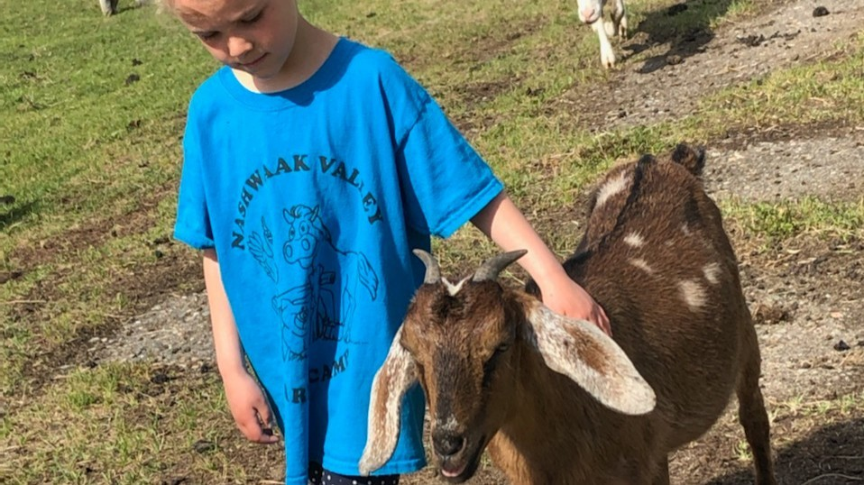 Jean-Rose Robinson takes care of a goat at Nashwaak Valley Farm summer day camp.