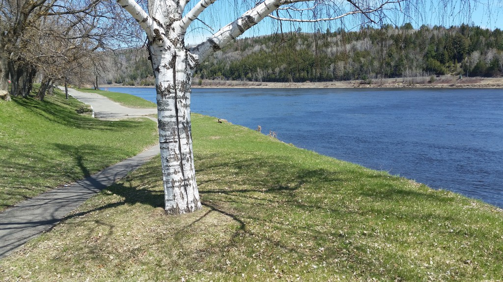 The Perth-Andover recreation department is inviting local shutterbugs to send in their favourite photos of the village to be considered for its 2021 calendar.
