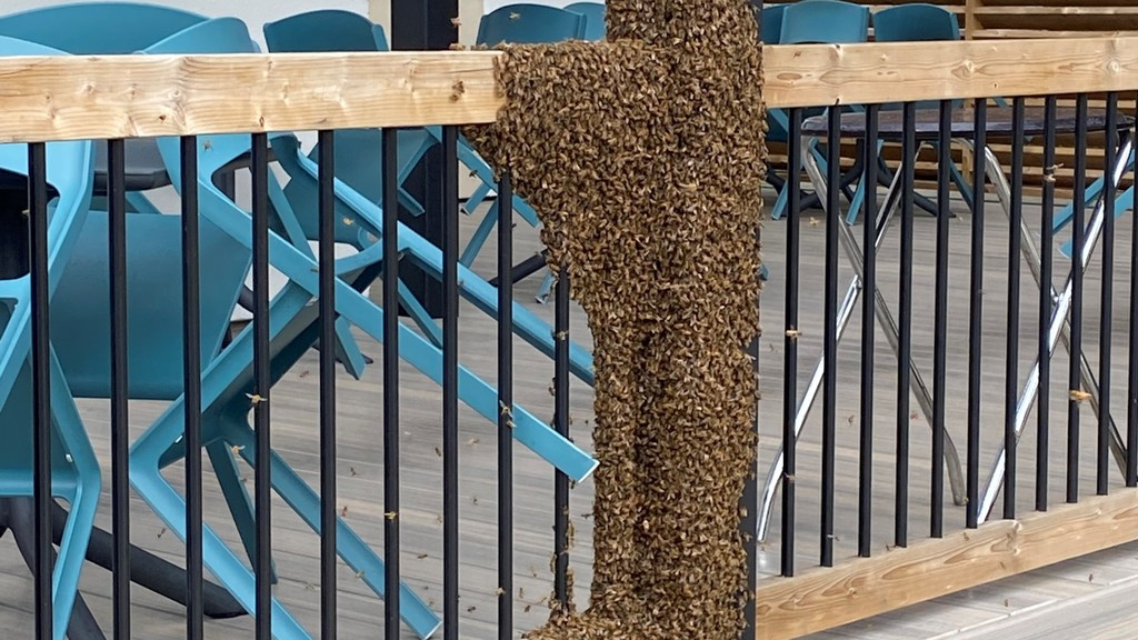 A swarm of bees shut down the patio of the Joyce Pub, along with a small section of sidewalk along Queen Street on Monday.