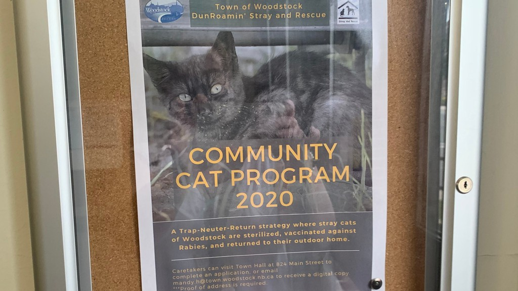 This poster advertising the Community Cat Program is on display at the Woodstock post office on Main Street.