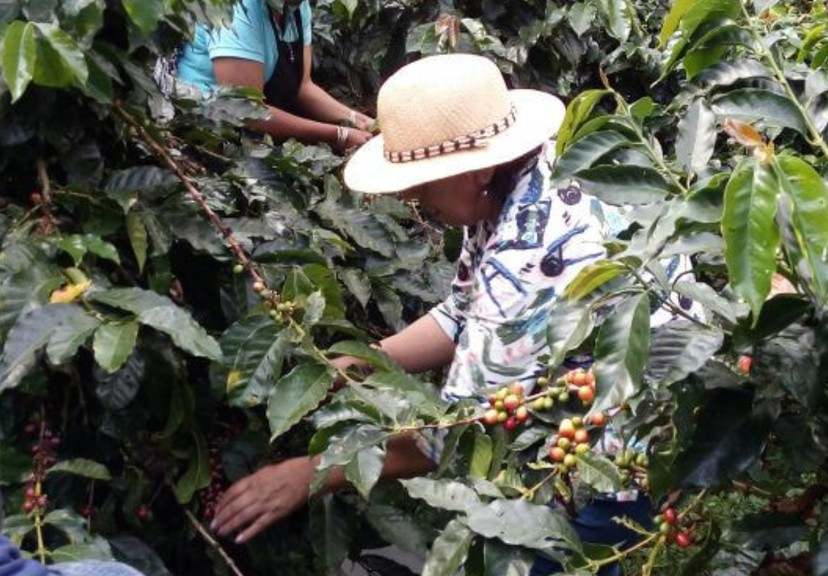 Picadilly Coffee Roasters owner Elissa Colpitts says it's important to know the story behind the coffee beans that people consume. She recently added a new bean made by a cooperative of female coffee growers in Colombia.