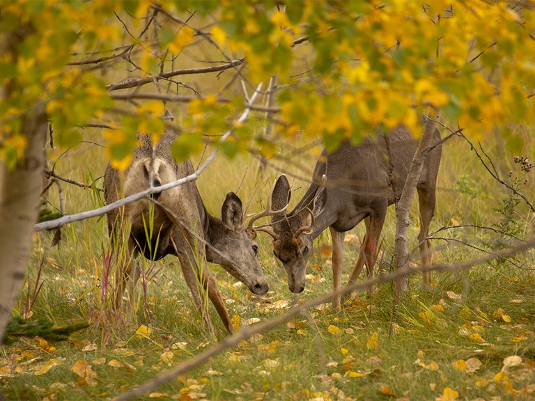 The annual Nuisance Deer Hunt in Saint Andrews has happened since 2016.
