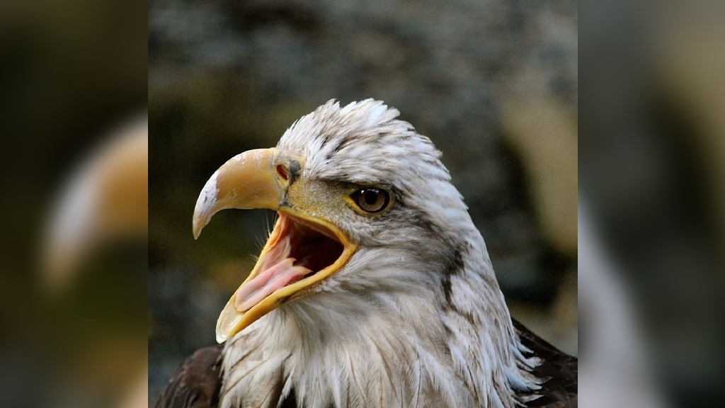Angela Stone's closeup placed second in Florenceville-Bristol's eagle photo contest.