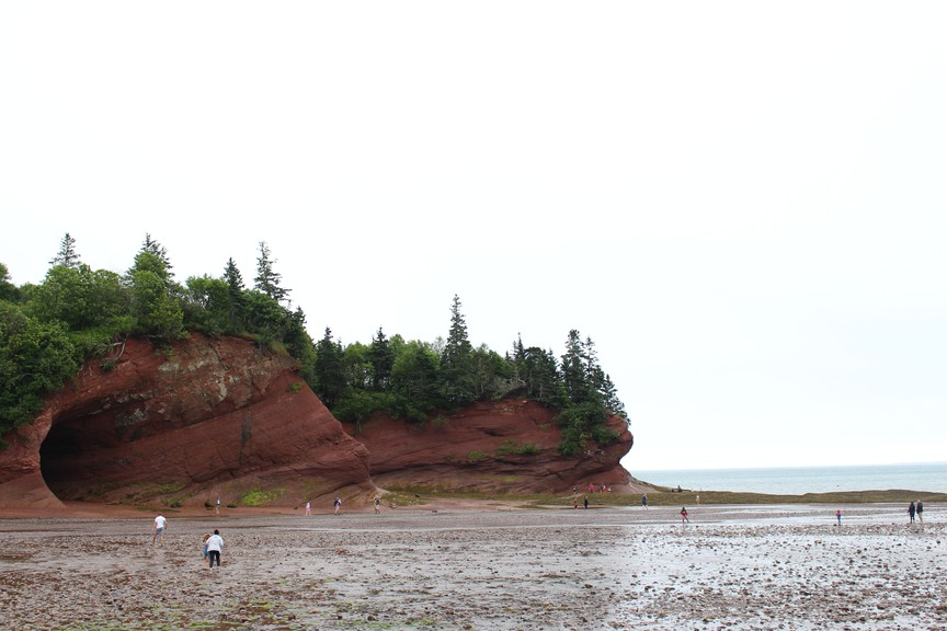 A group of seven kayakers in St. Martins saw a dorsal fin that was 18 to 20 inches long in the water on Aug. 5. Their guide said it likely belonged to a basking shark.