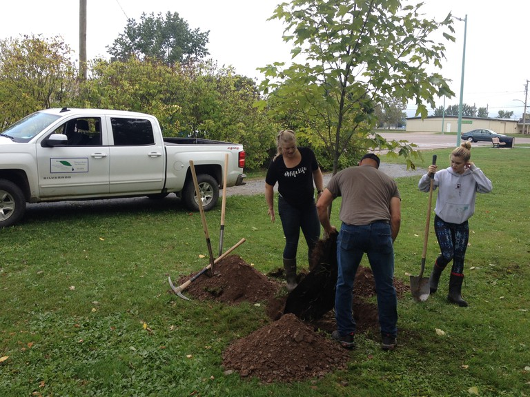 The Kennebecasis Watershed Restoration Committee and the Town of Sussex have teamed up to organize a tree-planting event to restore vegetation along the Gateway Mall flood berm.