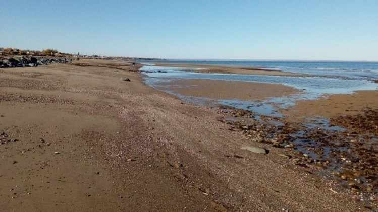 Judy Scott Boudreau took a picture of the extreme low tides in Salmon Beach from their house on Sunday.
