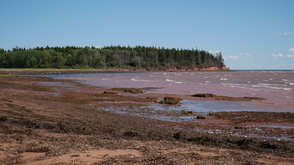 The Campbells just donated a 58-hectare salt marsh and forested island on the Northumberland Strait to the Nature Conservancy of Canada.