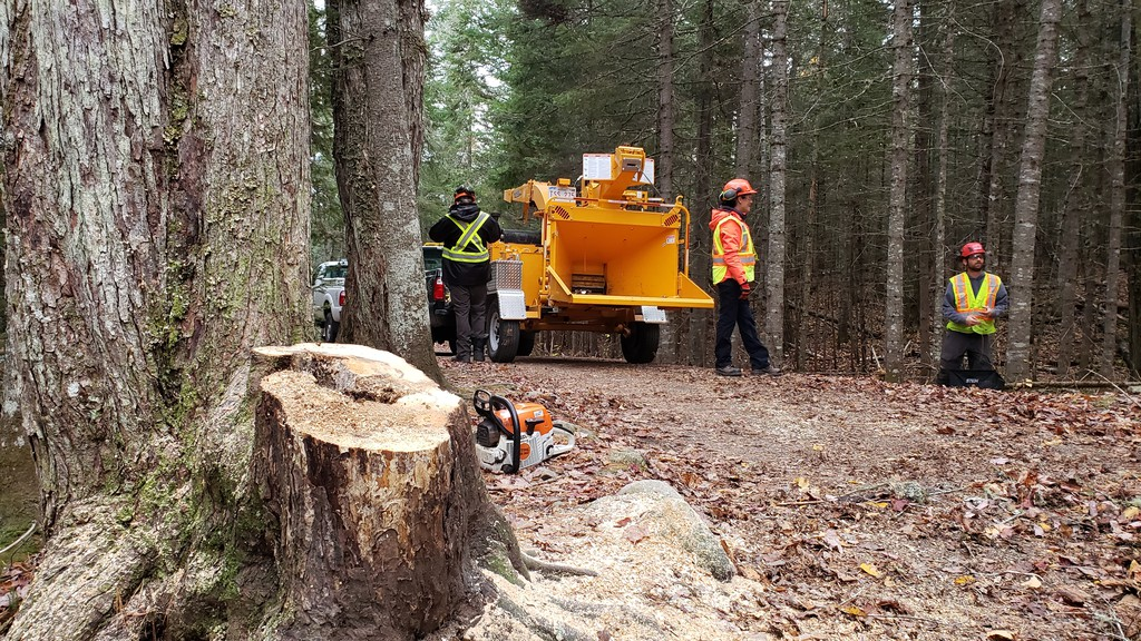 City workers Lori Forget, left, and Scott Prickett work on cutting trees near the trail at Killarney Lake Park.
