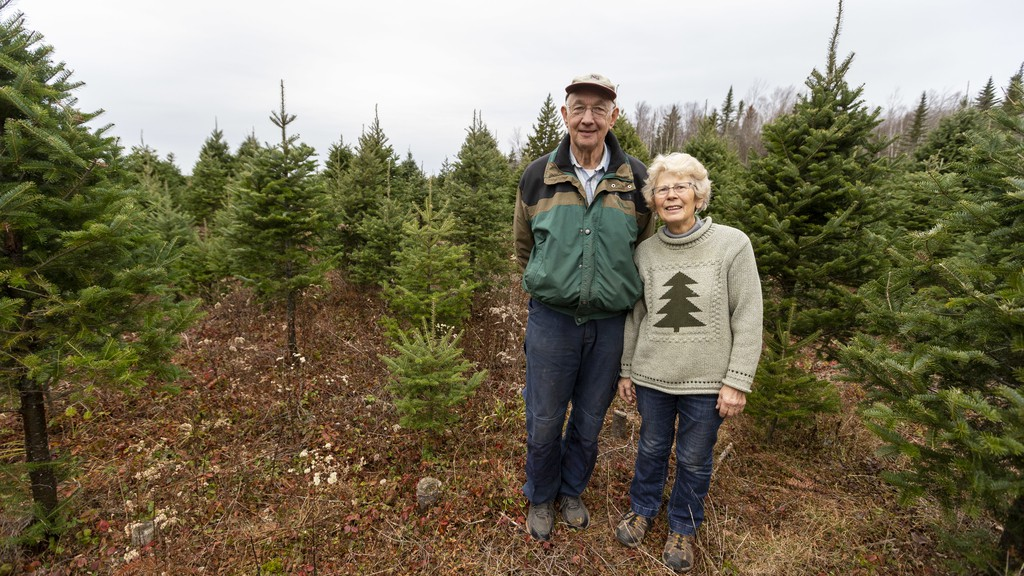 Raymond and Laura Folkins, owners of L and R Evergreens, stand in their tree farm on Nov. 20. Business has been good this year despite the pandemic, Raymond said, as demand for real trees continues to climb.
