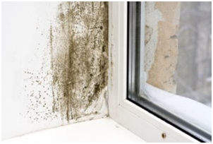 Mold at Home