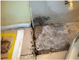 Water Damage Amp Mold Remediation In Naples Fl