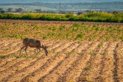 BRICE FARM, Clarendon, TX 79226 - Photo 2