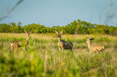 BRICE FARM, Clarendon, TX 79226 - Photo 1