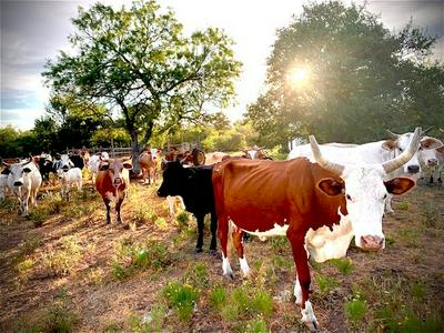 1718 SH-21 HWY, Cedar Creek, TX 78612 - Photo 2