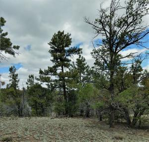 43 PAPOOSE PL, Datil, NM 87821 - Photo 1
