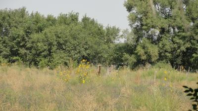 MOLINA ROAD TRACT A4B, Peralta, NM 87042 - Photo 1