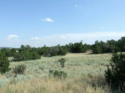 WILDLIFE TRAIL, Edgewood, NM 87015 - Photo 1