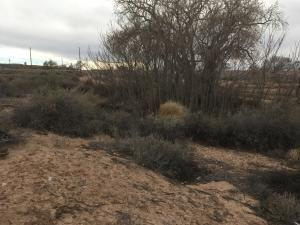 NEW MEXICO STATE 313 ROAD, Algodones, NM 87001 - Photo 2