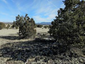 31 WALLACE MESA TRL, Datil, NM 87821 - Photo 2