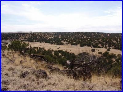 51 COWBOY PASS, QUEMADO, NM 87829 - Photo 2