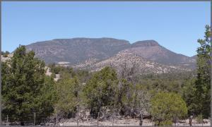 4 RUTTER RANCH RD, Datil, NM 87821 - Photo 1