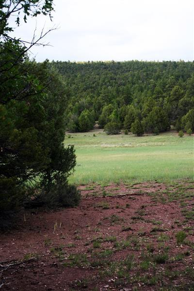 LOT 14 SAGEBRUSH, Ramah, NM 87321 - Photo 2