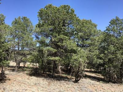 0 MOUNTAIN VALLEY, Tijeras, NM 87059 - Photo 1
