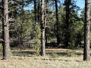 LOT 17 YUCCA, Ramah, NM 87321 - Photo 1