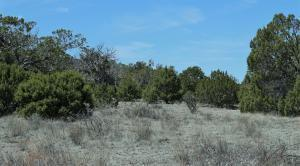 6 FAWN CIR, Datil, NM 87821 - Photo 1