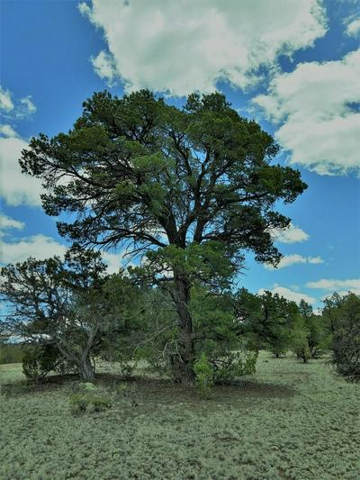 LOT 95 RANCH ROAD, DATIL, NM 87821 - Photo 1
