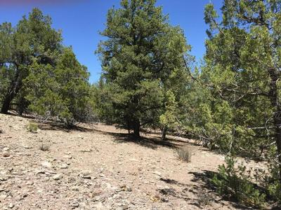 LOT 13 FOX - TIMBERLAKE ROAD, Ramah, NM 87321 - Photo 1
