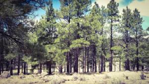 NR. HIGHWAY 32, Aragon, NM 87820 - Photo 2