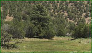 29 HIGHWAY 12, Aragon, NM 87820 - Photo 1