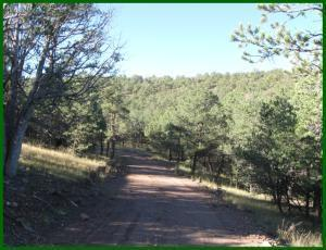 48 BRIDGER PASS, Datil, NM 87821 - Photo 2