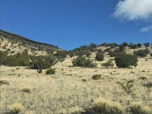 44&45 ROCK SPRINGS LOOP, Datil, NM 87821 - Photo 1