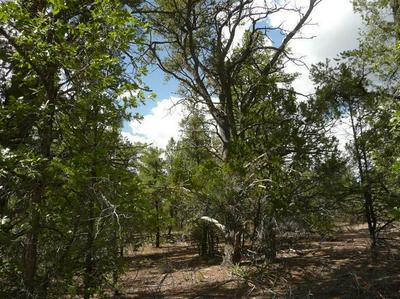 LOT 21 ROADRUNNER, Ramah, NM 87321 - Photo 1