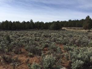COUNTY ROAD 432, Gallina, NM 87017 - Photo 2