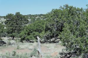 42 RAVEN LOOP, Datil, NM 87821 - Photo 2