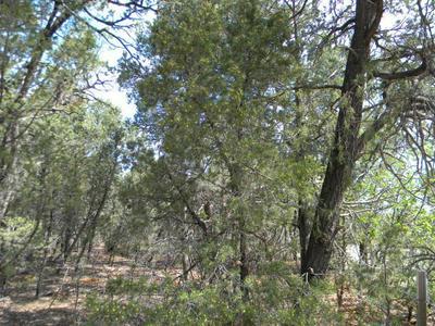 80 BUCKBOARD RD, Tijeras, NM 87059 - Photo 2