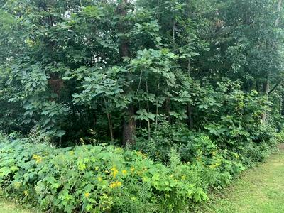 16 ELM AVE, Willsboro, NY 12996 - Photo 1