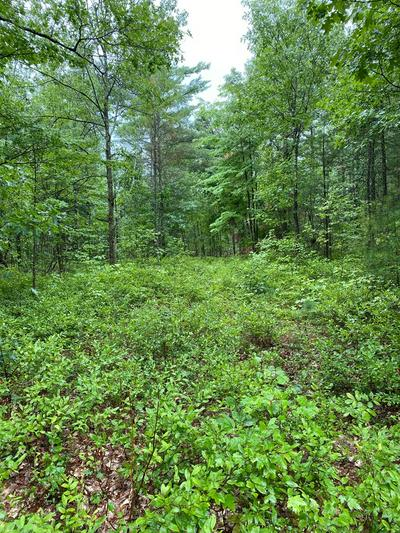 LOT 37 PLAINS ROAD, Peru, NY 12972 - Photo 2