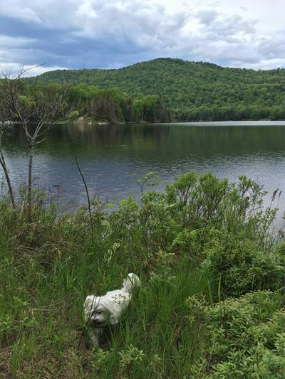1728 GOODNOW FLOW RD, Newcomb, NY 12852 - Photo 1