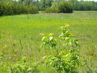 0 MASON STREET - LOT #6, Morrisonville, NY 12962 - Photo 1