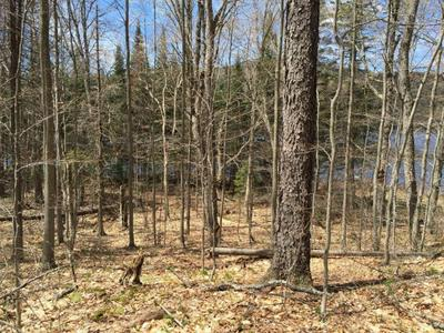1728 GOODNOW FLOW RD, Newcomb, NY 12852 - Photo 2
