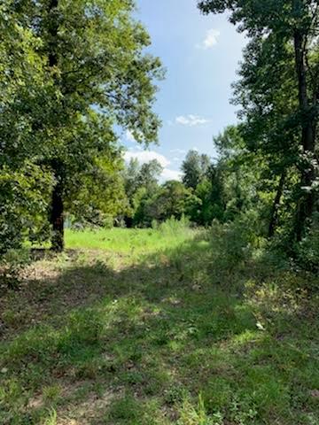 597 WHITE POND RD, WILLISTON, SC 29853 - Photo 2